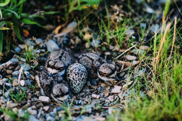 hatchlings on forest floor