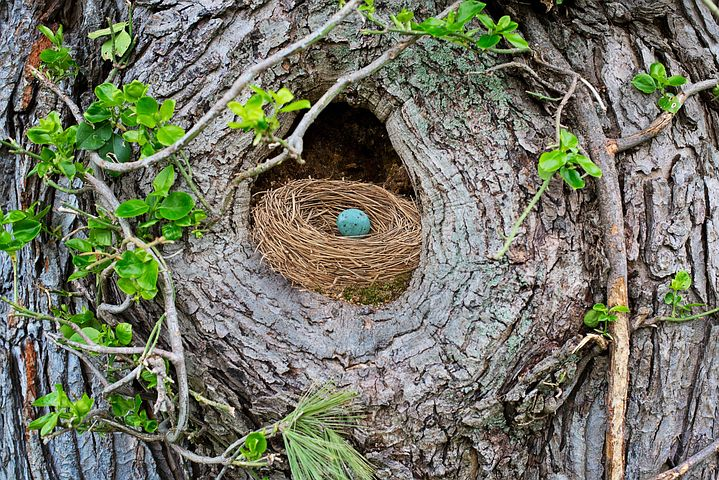 bird's nest with blue egg